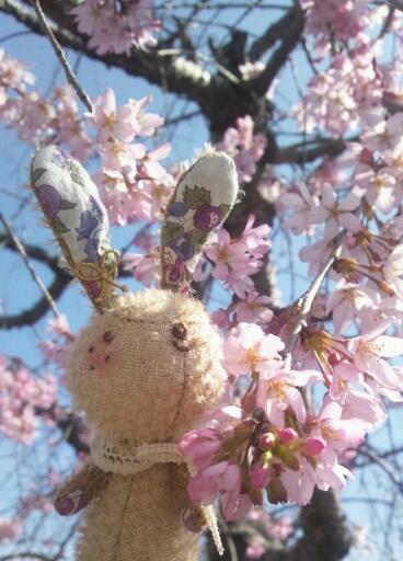 うさぎと垂れ桜♪
